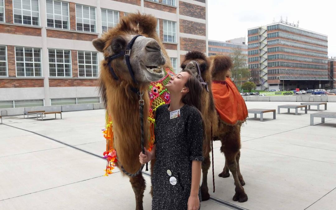Cestovanie na chrbte ťavy – festival Culturea 2017